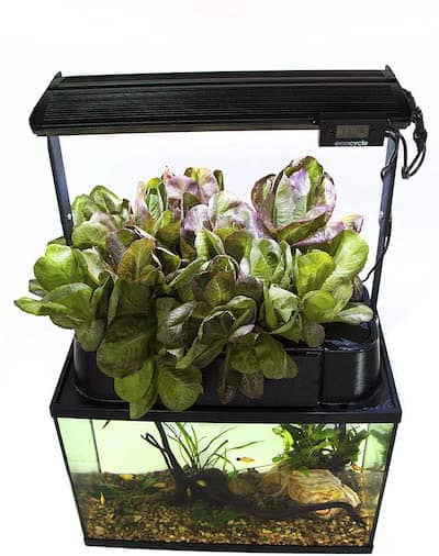 ecocycle-aquaponics