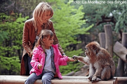 La montagne des singes is a one-animal zoo in france: it's all about monkeys.