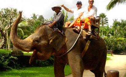 Best Elephant ride in bali