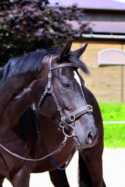 tundlikele hobustele