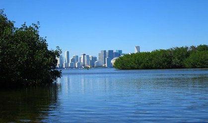 Emerging from the mangroves on Virginia Key, the high-rises of Miami loom across Biscayne Bay.