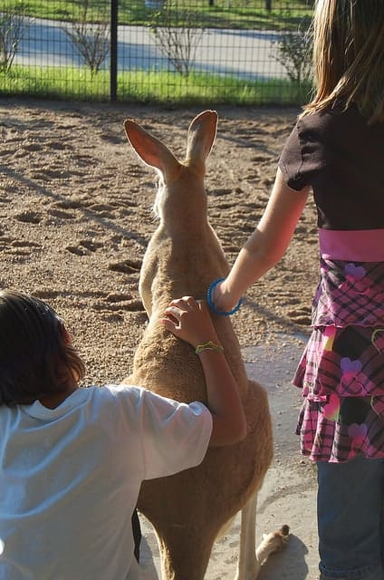Kids with Tanganyika kangaroo