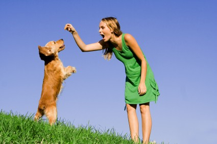 dog obedience courses