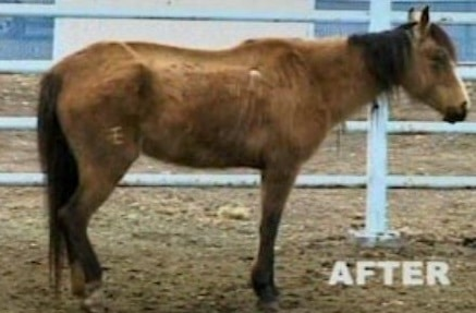 29 Horses Seized from Purported Rescue