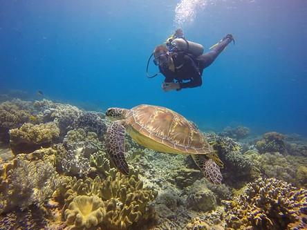 Komodo island, Indonesia.