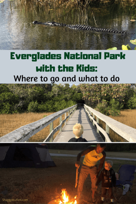 visting the everglades national park with kids 3