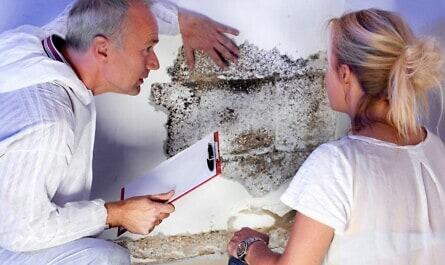 Beratung zu Schimmel im Mauerwerk