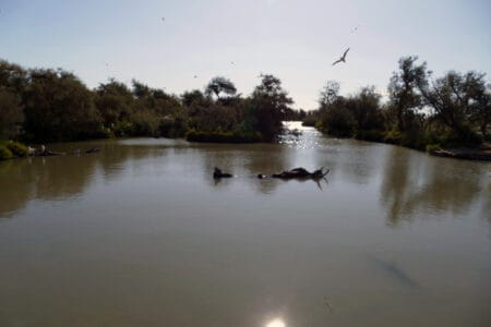 Camargue Nationalpark