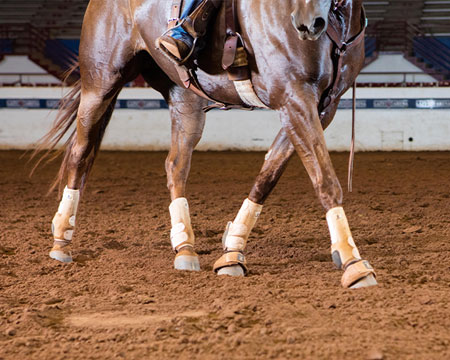 Horse Arena Maintenance Tips For Show-Ready Reining Arenas