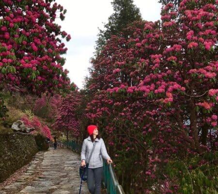 Trekking in spring - on the way to tungnath chandrashila trek in april first week.