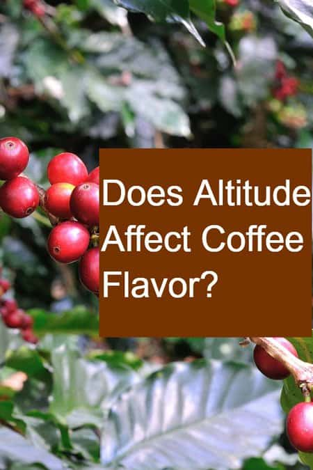 Does Altitude Affect Coffee Flavor? - Pin