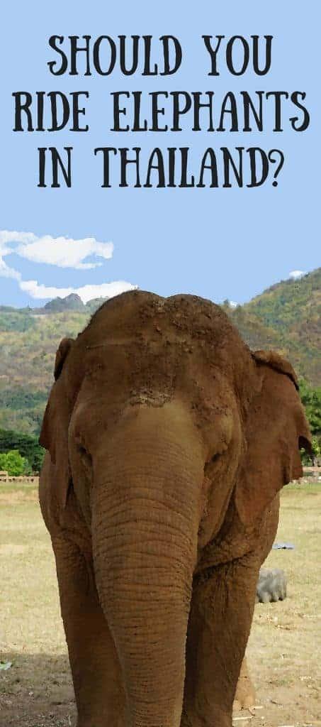 Should You Ride Elephants-
