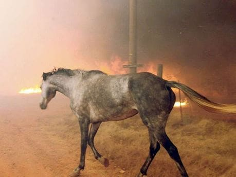 Don't leave horses to fend for themselves in wildfires. Get them out before evacuation orders.