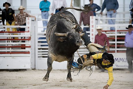 homestead rodeo Homestead Rodeo: Cancelled for 2021