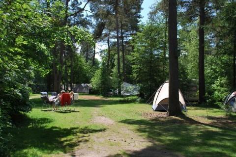 Familiecamping in het bos kampeerplaats basis