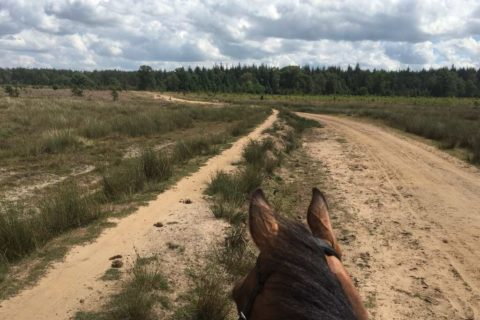Kale Duinen te paard