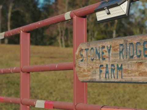 Reflections on the Stoney Ridge Farmer