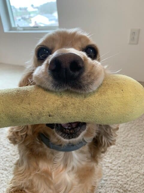 franklin and his squash