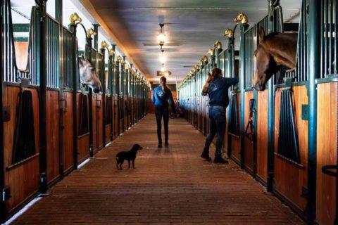 Park Drentheland Paardenboxen