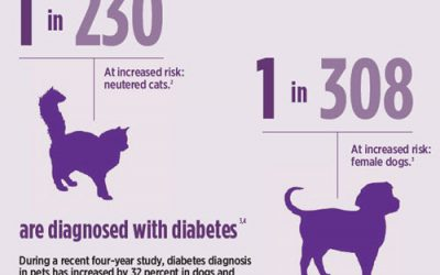 World Diabetes Day Pets and You Together