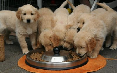 Pet Food Facts – What's Really In It?