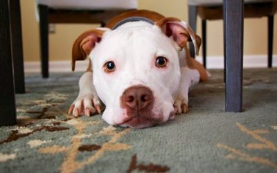 5 Tips to Giving First Aid for Pets