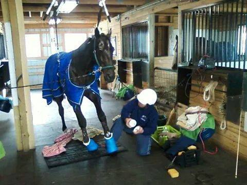 Two Horses Seized from Monica Thors Euthanized