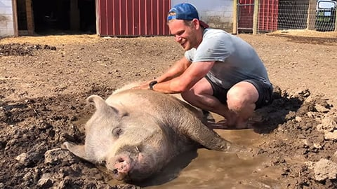 Rescued Pigs Get a Second Chance in an Animal Sanctuary
