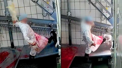 New Video Shows Workers Throw, Kick & Kill Fully Aware Lambs in Spain