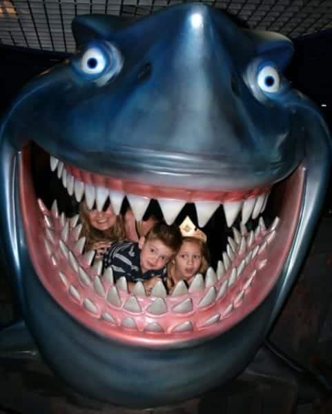 epcot, walt disney world, nemo, shark