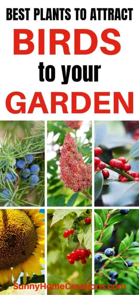 Best plants to attract birds to your garden
