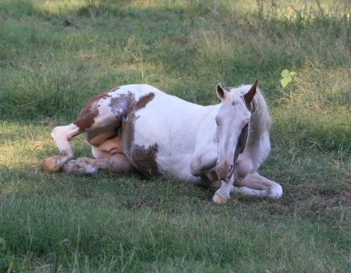 Colic and Your Horse: A Veterinarian's Perspective