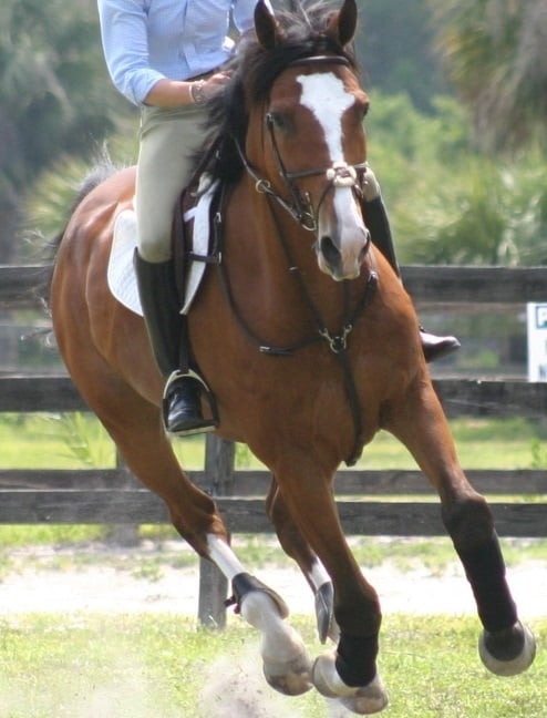 Preventative Measures to Protect Your Horse's Health When Showing
