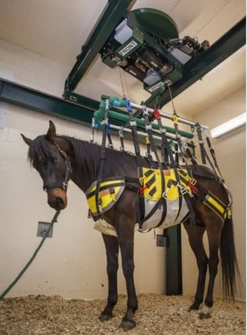 Robotic Medical Device May Improve Equine Healing: Researchers