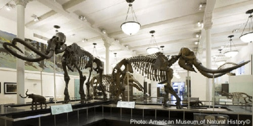 Spend the night at the museum with these bones