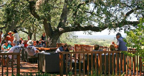 Best Texas Hill Country Wineries | Wine Road 290, Fredericksburg, Texas | Pedernales Cellars View