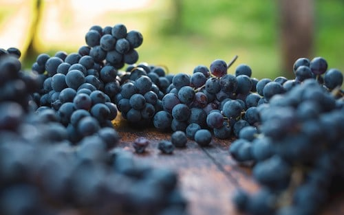 Cabernet Franc Flavors and Tasting Notes in Varietal Wines and Blends