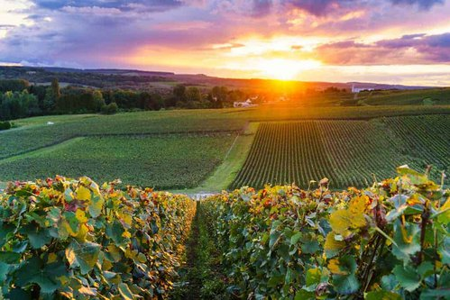 What to See Visiting Champagne France | Best Vineyards in Champagne France | Winetraveler.com