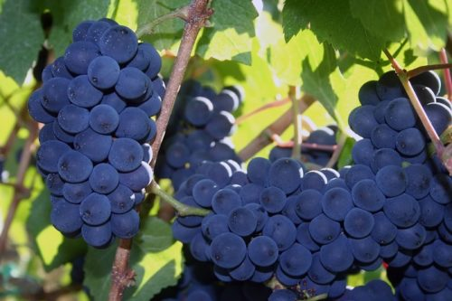 Willamette Valley Pinot Noir Wines | Winetraveler.com
