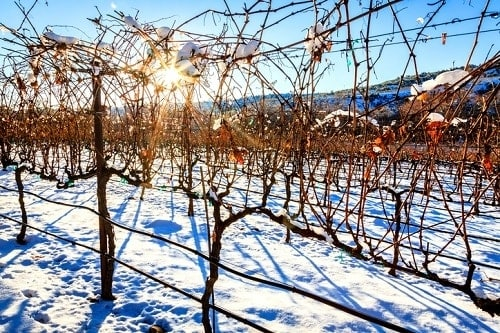Best Winter Wine Festivals to Visit   Winetraveler.com