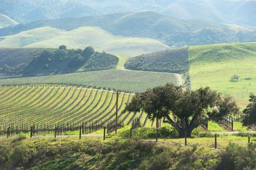 Stops along the way from Los Angeles to Napa Valley - Scenic Route Central Coast | Winetraveler.com