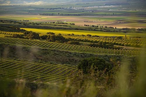 2 Day Itinerary: Santa Lucia Highlands of Monterey County • Winetraveler