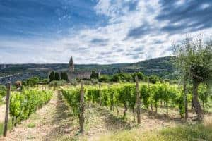 Tips for Planning a Wine Vacation | How to Plan a Wine Tasting Tour | The Best Wine Travel Trip Guide | How to Figure Out a Wine Route | Winetraveler.com