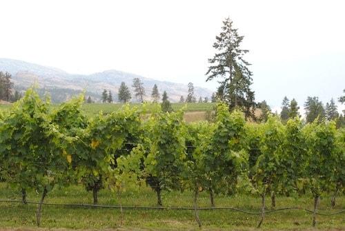 Best Wineries To Visit in Kelowna Canada