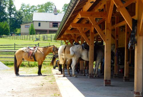 horses waiting to ride at Ironstone stables