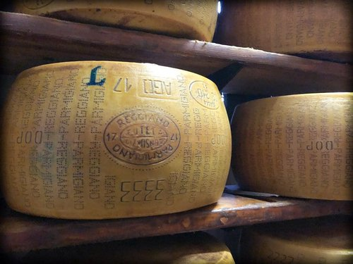 A wheel of parmesan cheese stamped with Parmigiano Reggiano brand, with other wheels in the background, aging on a shelf at a dairy in Parma Italy.