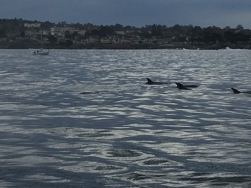 Whale Watching with Monterey Bay Whale Watch | Winetraveler.com