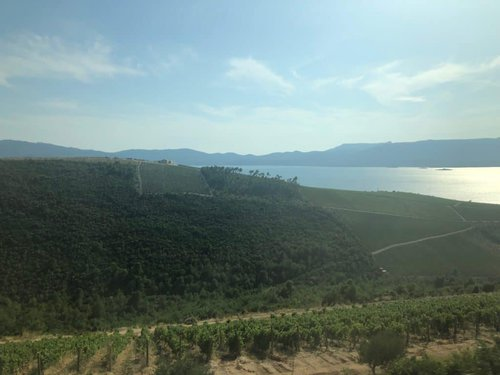 The sloping vineyards of the Peljesac. Photo by Lori Zaino.