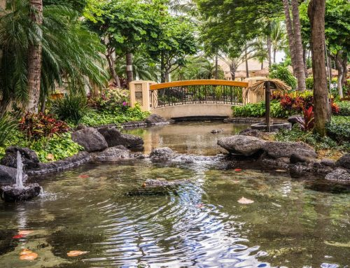 9 Ideas to Make Your Koi Pond Experience Even Better