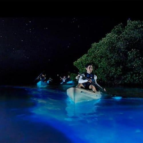 People kayak through the bioluminescent bay near Vieques, one of three in Puerto Rico.